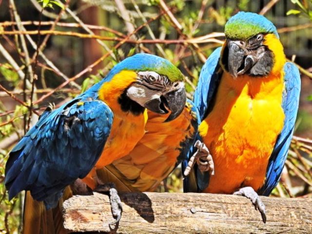 Papageien tiergerecht halten