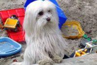 Dogs4friends – artgerechtes Zubehör in Premiumqualität