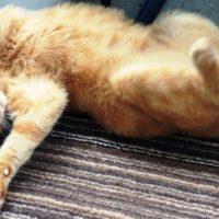 Katzensprache – Richtig Deuten