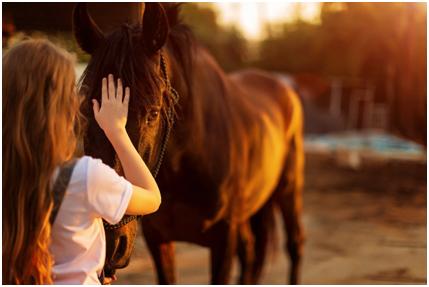 Aktuelles aus der Pferdewelt