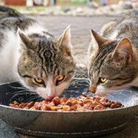 Hochwertiges Katzenfutter – Woran erkennt man es?