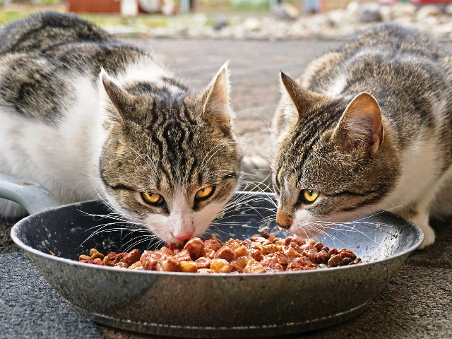 Hochwertiges Katzenfutter, Quelle: pixabay